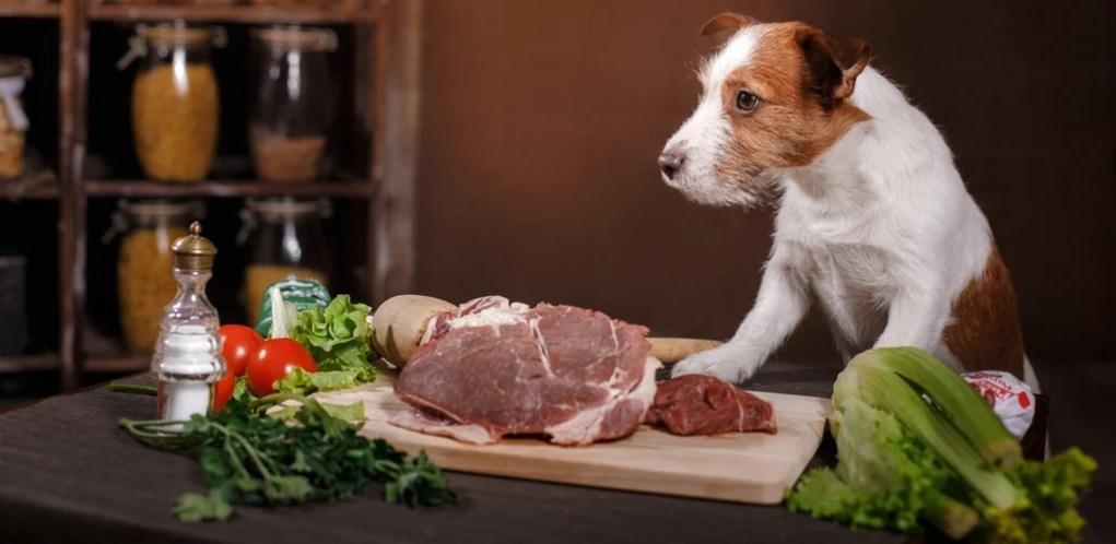 Raw Dog Feeding