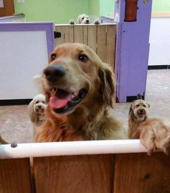 Runaway Canine Joins His Friends at Doggy Daycare