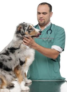 Science on Raw Diets for Dogs