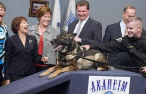 This Police K-9 Survived Being Shot, But What Happened Next is Heartbreaking
