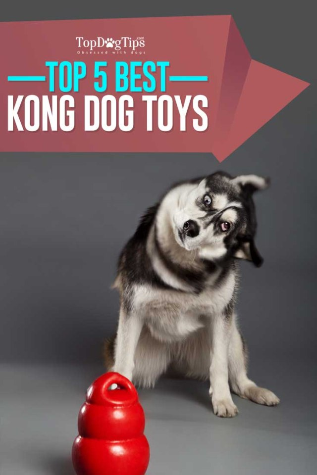 Top Rated Best KONG Dog Toys