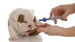 Vaccines That Dogs May Be Allergic To