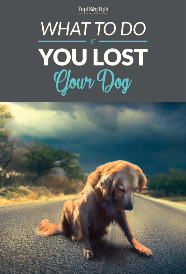 What to do if You Lost a Dog