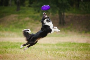 Disc Dog for all types of dog breeds