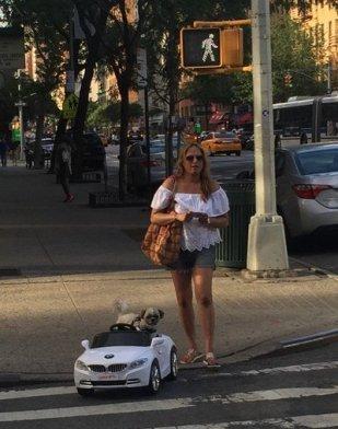 Dog Driving a BMW
