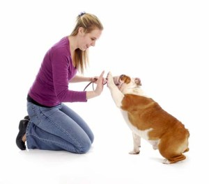 Express Affection Towards Your Dog