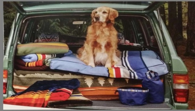 Pendleton Celebrates National Parks With Their Dog Apparel Collection