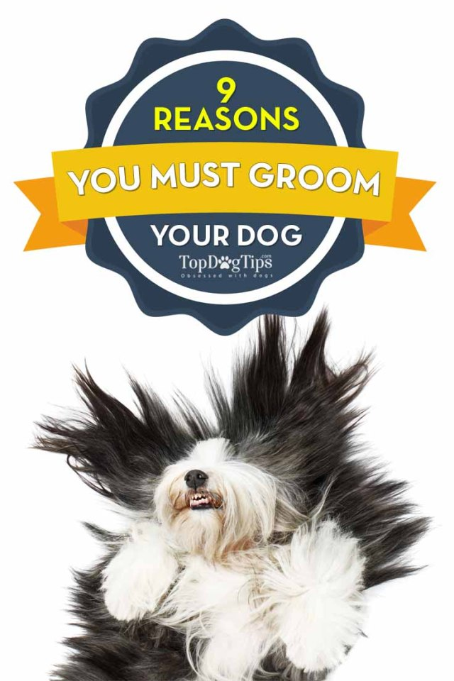 Reasons Why You Need to Groom Your Dog