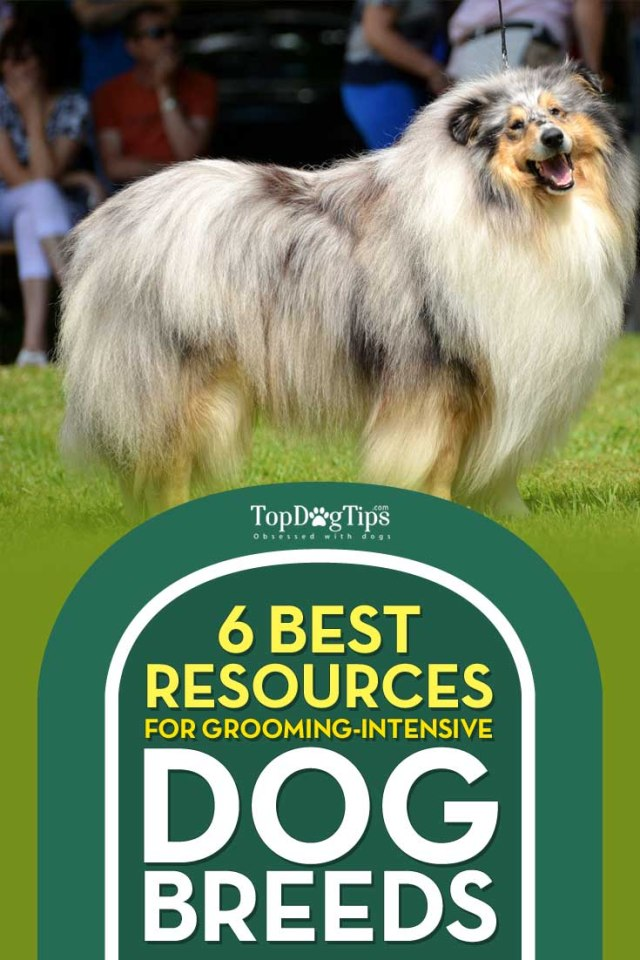 Resources on Grooming-Intensive Dog Breeds