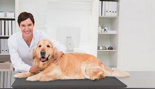 Rest Assured There's No More Hard Floors With Wellness Pet Mats