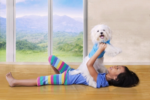 Maltese as Small Dog Breeds That Are Good With Kids