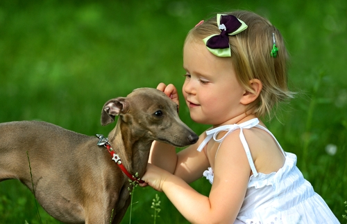 Italian Greyhound as Small Dog Breeds That Are Good With Kids