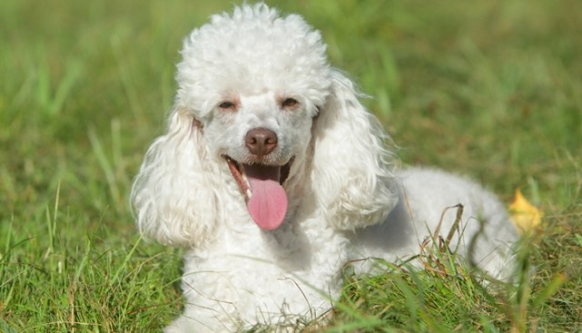 The Truth About Tear Stains on Dogs