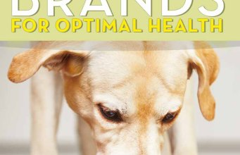 What is the Best Dog Food Brand for Health