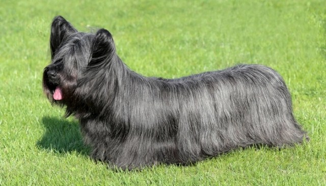10 Worst Dog Breeds for First Time Owners