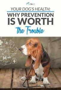 An Ounce of Prevention is Worth a Pound of Cure – For Dogs