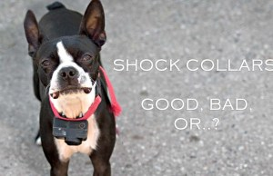Dog Shock Collars Controversy and What Experts Say