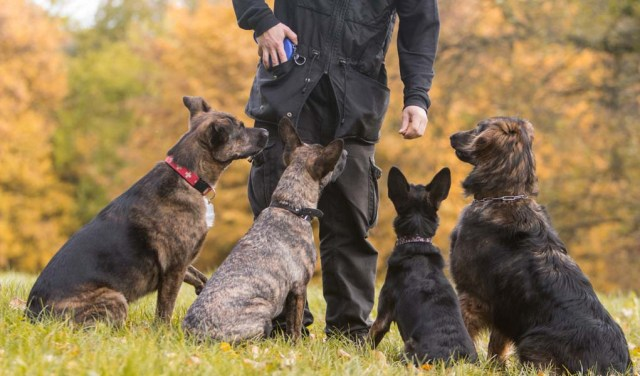 Dog Shock Collars Controversy