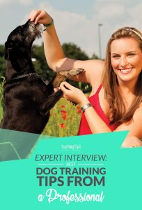 Expert Dog Training Tips