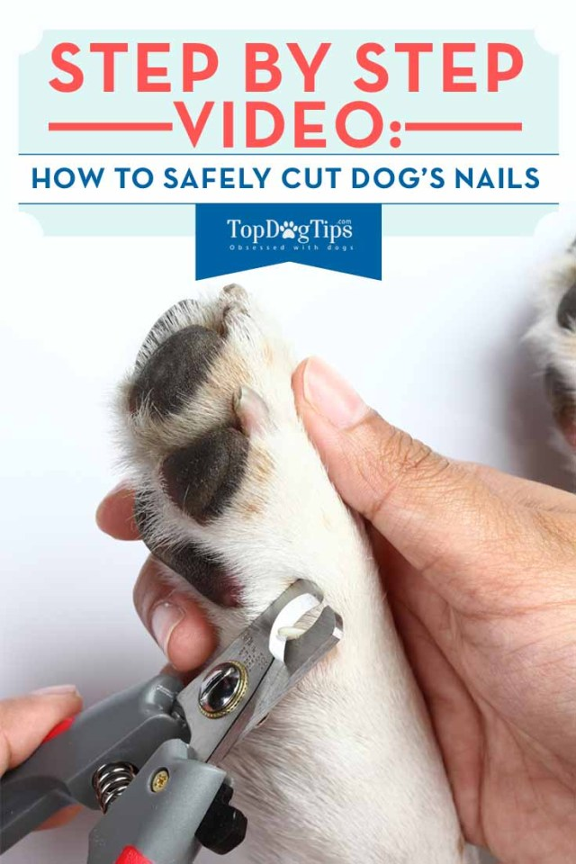 Guide on How to Cut Dog Nails