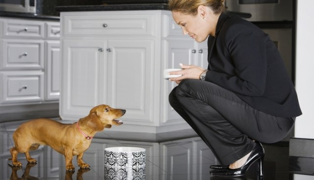 How Healthy Natural Dog Food Really Is