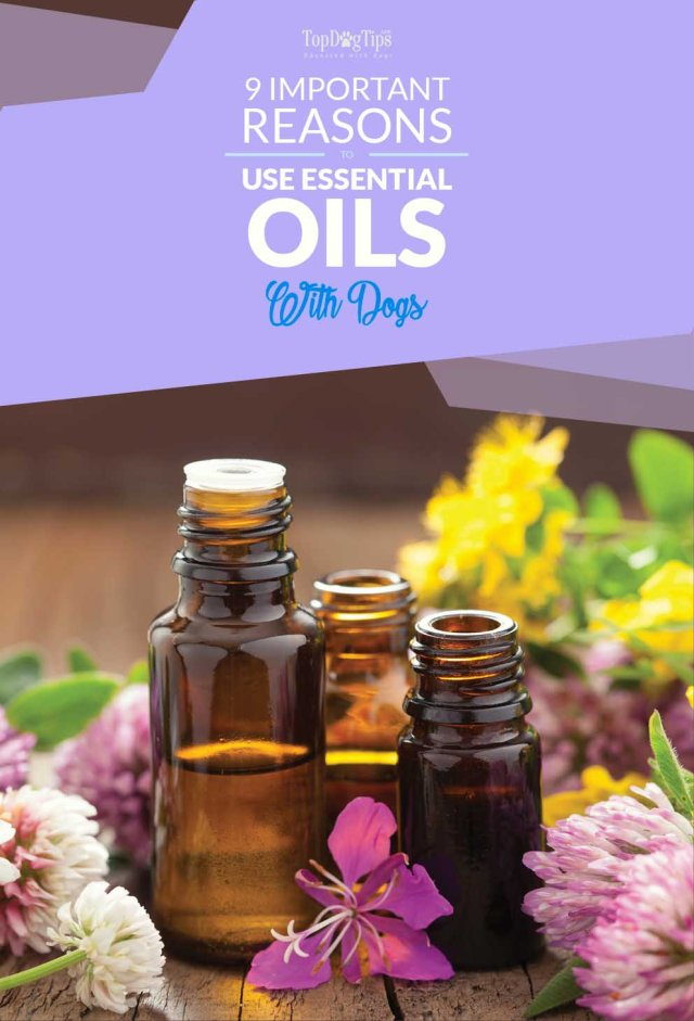 Reasons to Use Essential Oils for Dogs