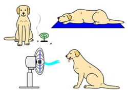 Some ways to prevent heat in dogs