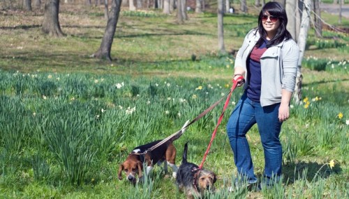 How to Pick Dog Walking Insurance
