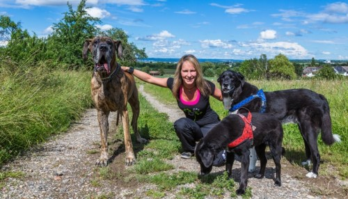 Dog Walking Insurance Comparison