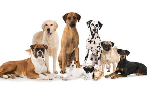 30 Most Popular Dog Breeds Famous All Over the World