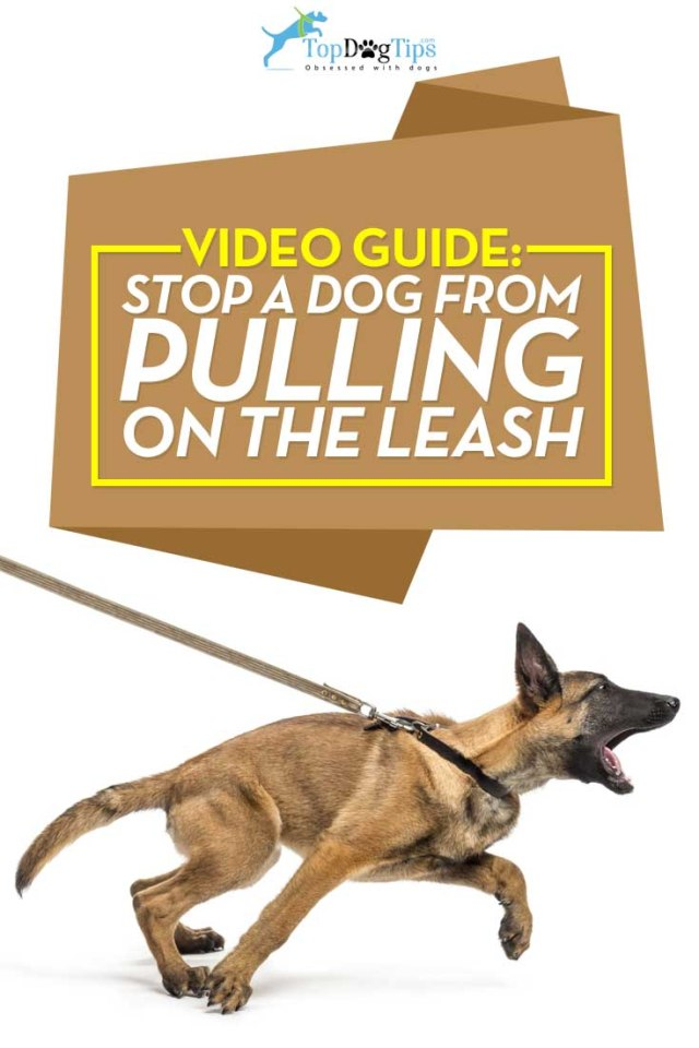 Best Tips on How To Stop A Dog From Pulling on the Leash