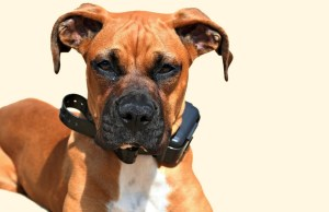 How Dog Owners Justify Training Dogs With Shock Collars