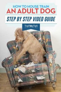 How To Housetrain An Adult Dog Video
