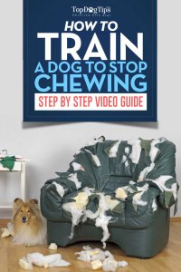How To Train A Dog To Stop Chewing Video