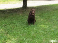 How to Train a Dog Basic Commands Easily