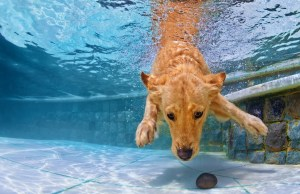 Pool Dangers For Dogs