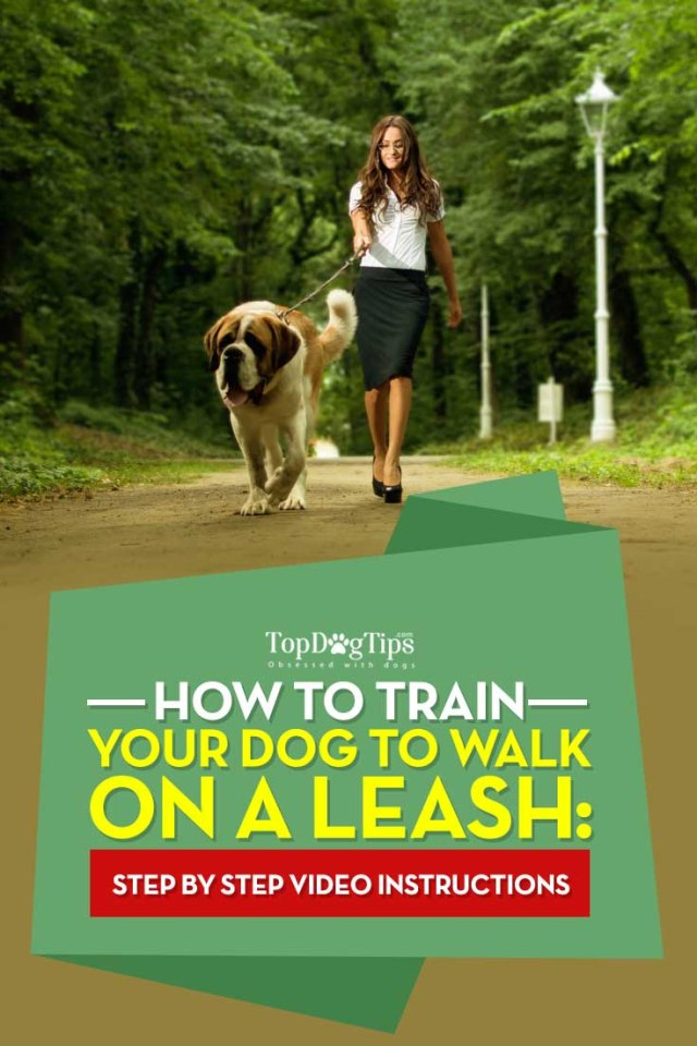 Tips on How To Train A Dog To Walk On A Leash