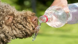 Ways to keep your dog cool in summer