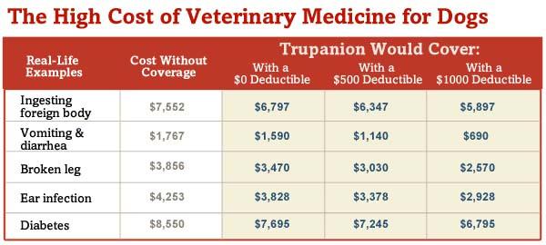 Dog Vet Costs