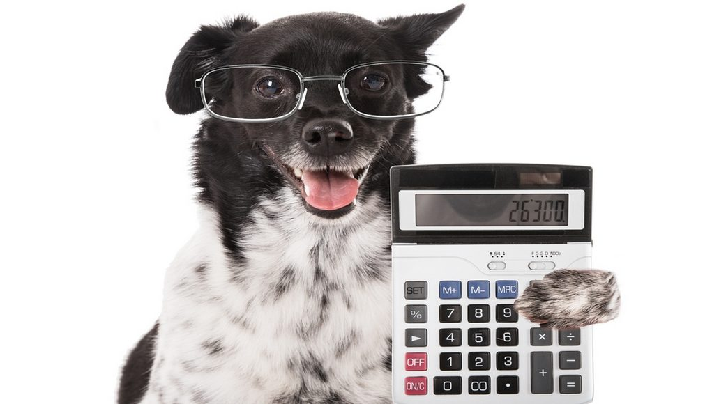 How Much Does a Dog Cost Budgeting Guide for Dog Owners