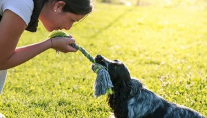 Dog Training Costs: $0-$200 First Year