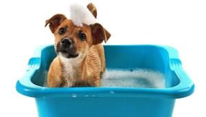 How To Make Dog Shampoo at Home