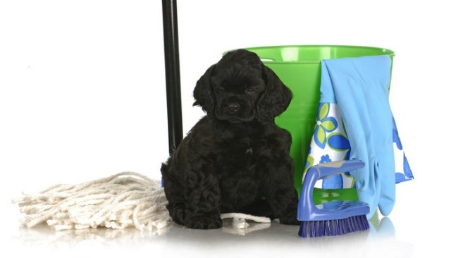 How To Toilet Train A Puppy
