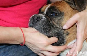 How to Give a Dog Medicine Safely