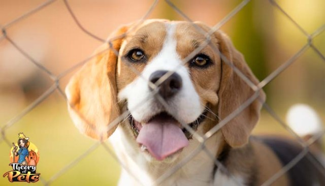 How to Keep Dogs Safe Using Pet Fences With Martin Havrilla