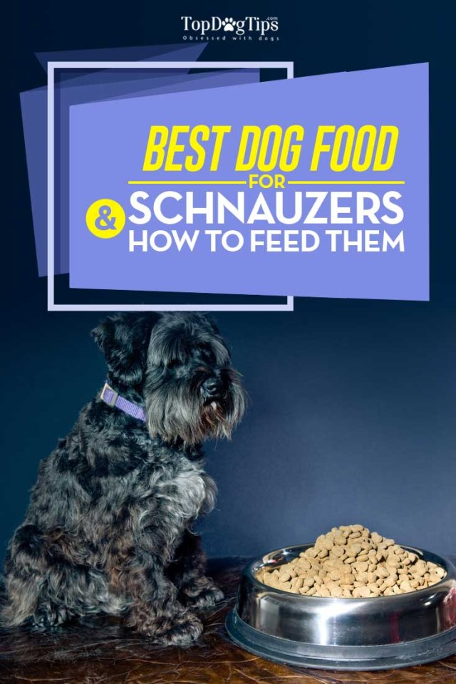 Top 5 Vet Recommended Best Dog Food for Schnauzers