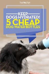 Top Best Dog Water Bottles