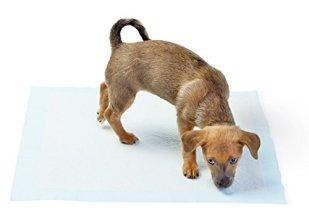 AmazonBasics Puppy Pee Pad Review