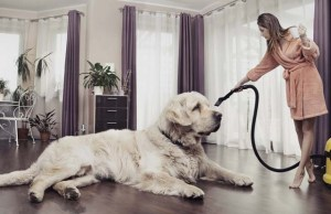 Best Vacuums for Pet Hair to Easily Clean Your Dogs Shed Hair