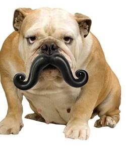 Moody Pet Humunga Stache Dog Toy